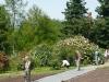 aleja-starych-roz-krzewiastych.jpg