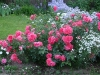 rosarium-uetersen1