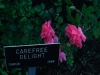 carefree-delight