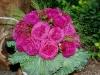 heidi-klum-rose-a